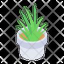 Indoor Plant Potted Plant Aloe Vera Plant Icon