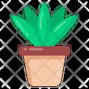 Potted Plant Aloe Vera Plant Succulent Plant Icon