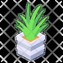 Plant Potted Plant Aloe Vera Plant Icon