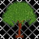 Alstonia Scholaris Wild Tree Shrub Icon