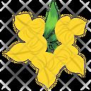 Amaryllis Flower Icon