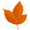American Beech Icon