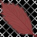 American Hornbeam Leaf Autumn Leaf Icon