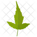 Amur Maple Icon