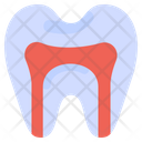 Anatomy Canal Root Icon