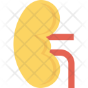 Anatomy Biology Kidney Icon