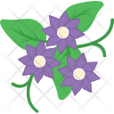 Anemone Flower Bloom Icon
