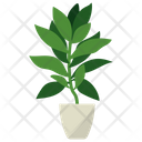 Angelica Root Icon