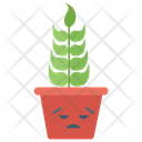 Angry Cactus Cactus Plant Succulent Plant Icon