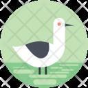 Animal Bird Goose Icon