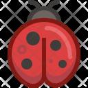 Animal Bug Ladybird Icon