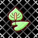 Anthurium Plant Botanical Icon