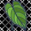 Anthurium Icon