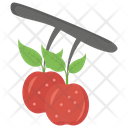 Apple In Orchard Icon
