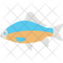Aquatic Fish Fish Freshwater Fish Icon