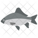 Aquatic Fish Fish Tropical Fish Icon
