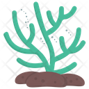 Seaweed Green Algae Edible Seaweed Icon