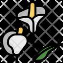 Araceae Icon