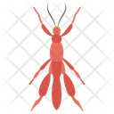 Arachnids Icon