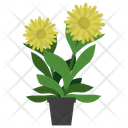 Arnica Potted Plant Icon