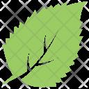 Aronia Chokeberry Leaf Icon