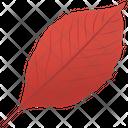 Aronia Leaf Icon