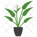 Arrowroot Potted Plant Icon