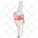 Artificial Human Knee Icon