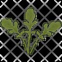 Arugula Leafy Vegetable Icon