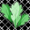 Arugula Icon