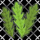 Arugula Herbal Spices Icon