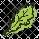 Arugula Leaf Plant Icon