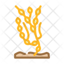Ascophyllum Icon