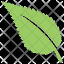 Ash Plant Tree Icon