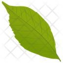 Ash Leaf Leaf Green Leaf Icon