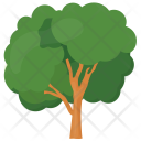 Ash Olive Evergreen Icon