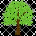 Ash Tree Olive Icon