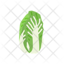 Asian Cabbage Icon