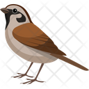 Asian Sparrow Pet Sparrow Icon