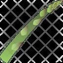 Asparagus Food Greenery Icon
