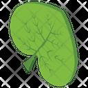 Leaf Plant Nature Icon