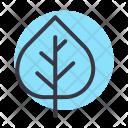 Aspen Nature Leaf Icon