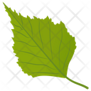 Aspen Leaf Birch Leaf Green Leaf Icon