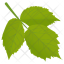 Aspen Leaves Icon
