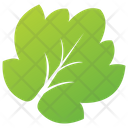 Aspen Tree Leaf Icon