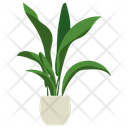 Aspidistra Potted Plant Icon
