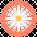 Aster Flower Calendula Icon
