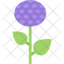 Aster Blossom Flower Icon
