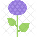 Aster Icon