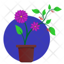 Astra flower Icon